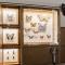 Exposição Insetos Ilustrados, na Seção de Obras Raras da Biblioteca de Manguinhos
